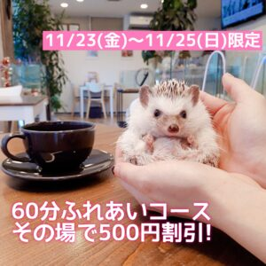 すみれファミリー展示開始記念イベント開催