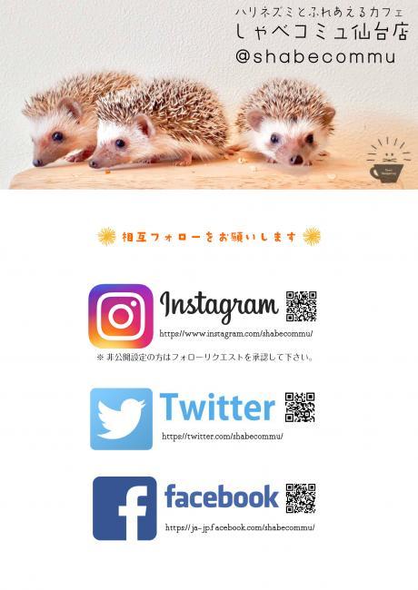 3月21日(木)11:00-16:00ハリネズミちゃんとふれあえる無料体験イベント開催です!