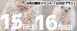 6月22日(土)・23日(日)仙台店はビュッフェDAY!山形店はチンチラDAY!開催