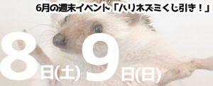 ハリネズミベビーとのふれあい体験会/6月1日(土)2日 仙台・山形同時開催