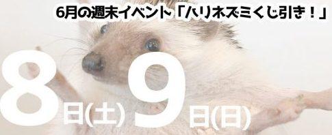 6月8日(土)・9日(日)仙台・山形店合同開催!「ハリネズミくじ引き!」
