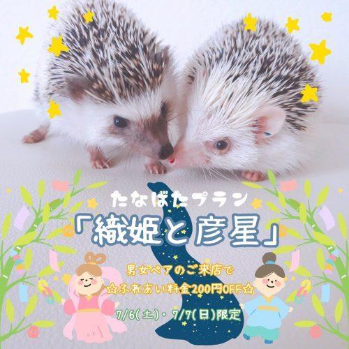 今週末は男女ぺアのための七夕プラン【織姫と彦星】を開催!!