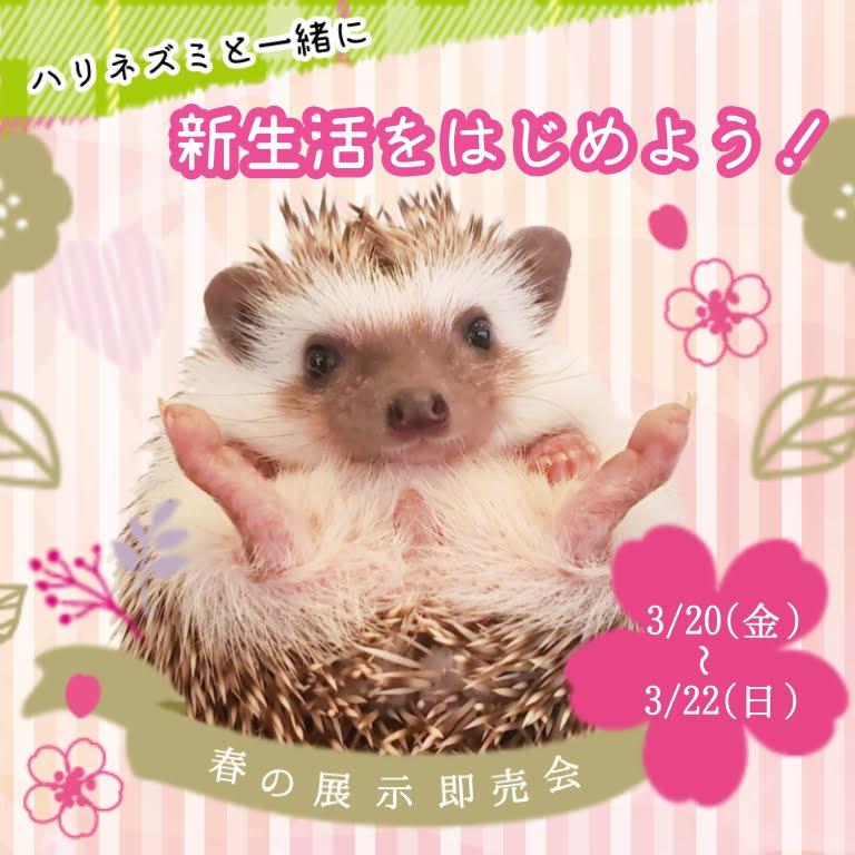 3月20・21・22日「春の展示即売会」開催♪