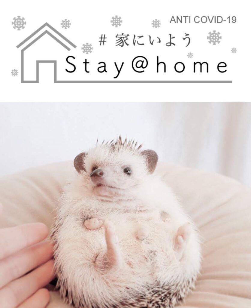 おうちで遊ぼう レンタルハリネズミ   ~Stay home~